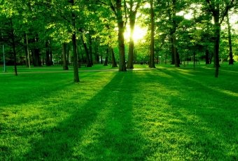 green-background-hd-wallpapers